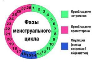 рассчитать период овуляции