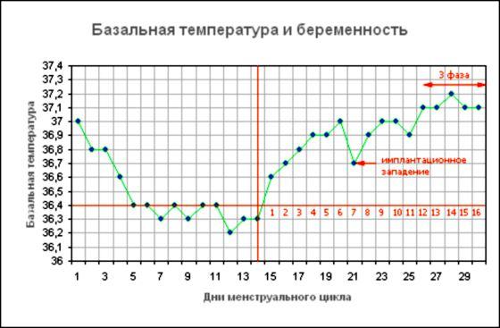 Как мерить базальную температуру при беременности