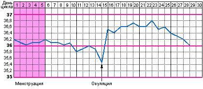 овуляция на графике