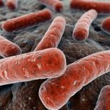 Инфекционные заболевания половых путей при беременности